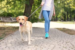 Why Do Dogs Get So Excited For Walks