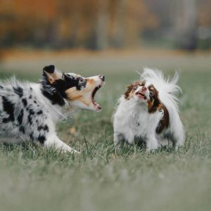 Why Do Dogs Show Their Teeth When Playing? Surprising Facts!