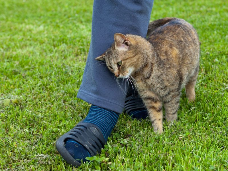 Why Does My Cat Rub Against My Legs? - Clever Pet Owners